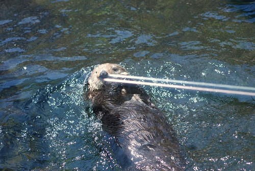 Otter shooting lasers out of his nose