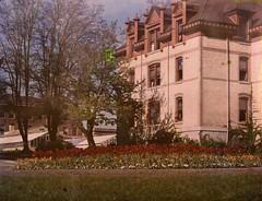 Tulip garden, Waldo Hall on OSU's campus, circa 1920