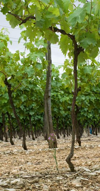 Dans les vignes et autres endroits inattendus 7389190022_175ed3e7bf_z
