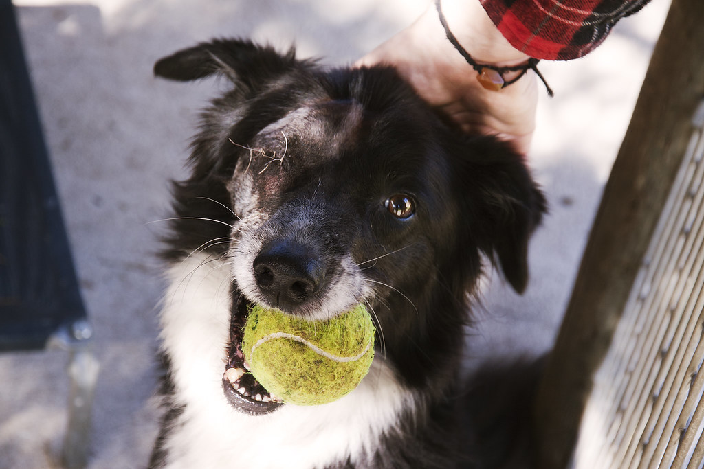 Donating to a local shelter is one way to help animals locally.