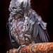 Small photo of Perched gray ara