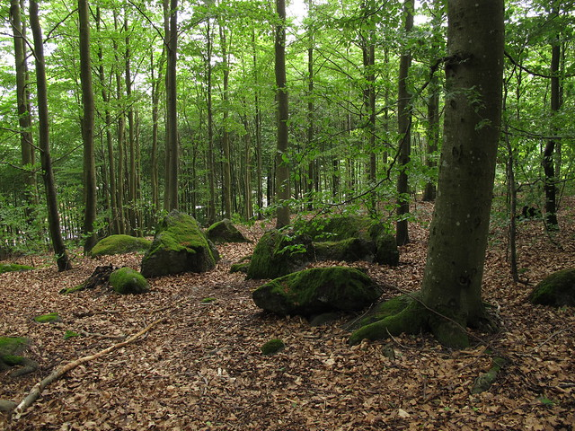 The beech forest in Larvik