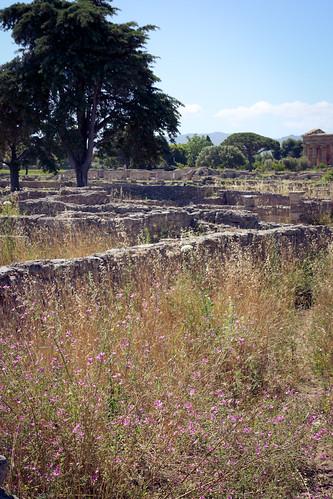Italy, Paestum