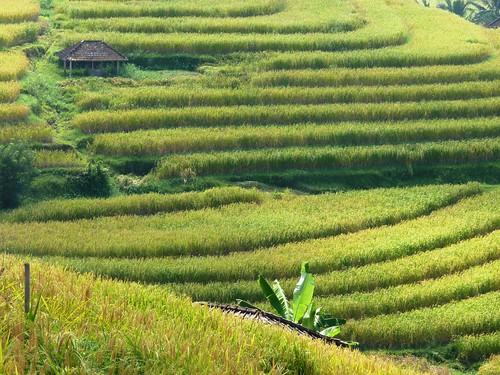 Bali-Route Legian-Jatiluwih (71)