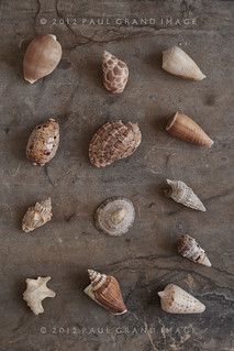 brown tones of shells