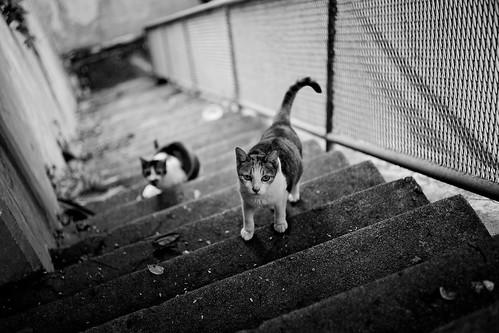 [フリー画像素材] 動物 1, 猫・ネコ, モノクロ ID:201207071000