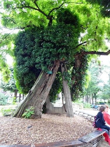 термобелье самые старые деревья подмосковья если шерсть применяется