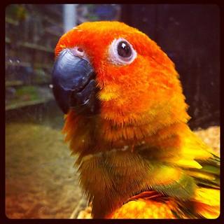 Awesome Bird at PetSmart