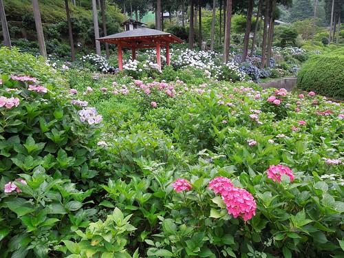 Photo 5 - 2012-07-08