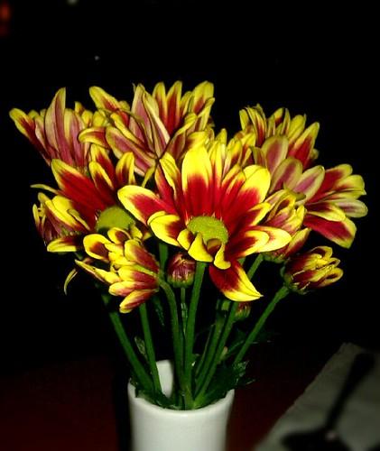 Make good feel, flower!