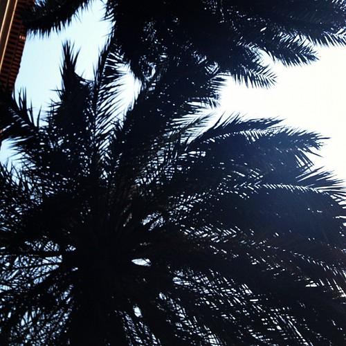 Paseando al pelón, echare de menos las palmeras... by rutroncal