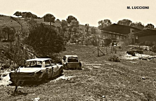 dégâts et désolation après l'incendie du 23 juillet 2009 en Corse du Sud météopassion