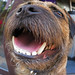 George the Border terrier . .  I am the Walrus