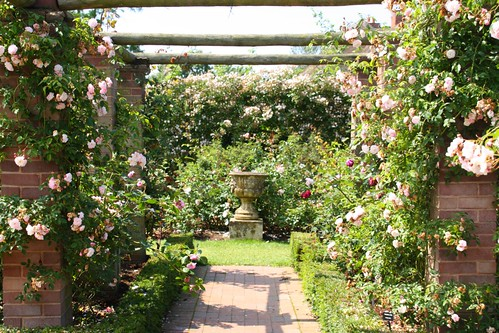 The Long Garden at David Austin Roses
