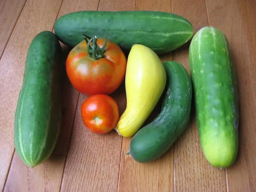 harvest 7-26