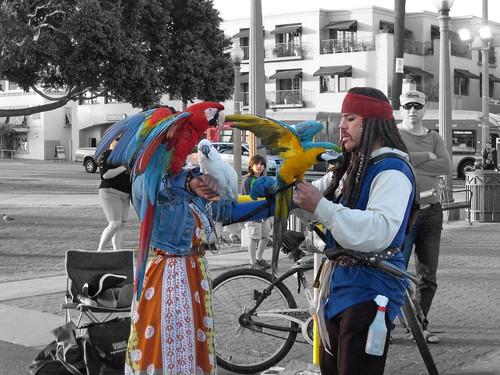 Santa Monica birds