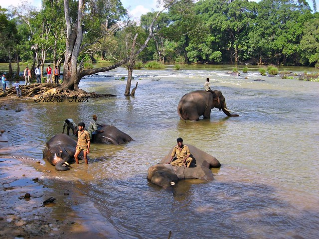 Elephantine bath...!
