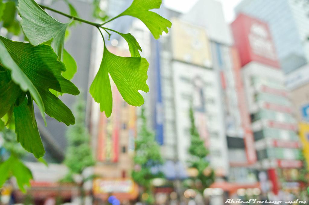 AkibaPhotography0025