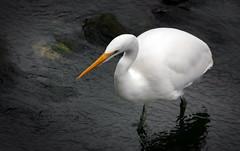 Birds found in New Zealand