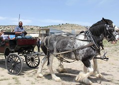 vehicle(1.0), pack animal(1.0), coachman(1.0), horse(1.0), horse harness(1.0), horse and buggy(1.0), land vehicle(1.0), carriage(1.0), cart(1.0),