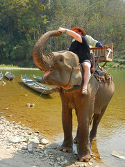 happy tourist feeding happy elephant
