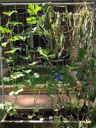 Coastal & Tropical South: June Garden Updates! 7177668173_931a4278a2