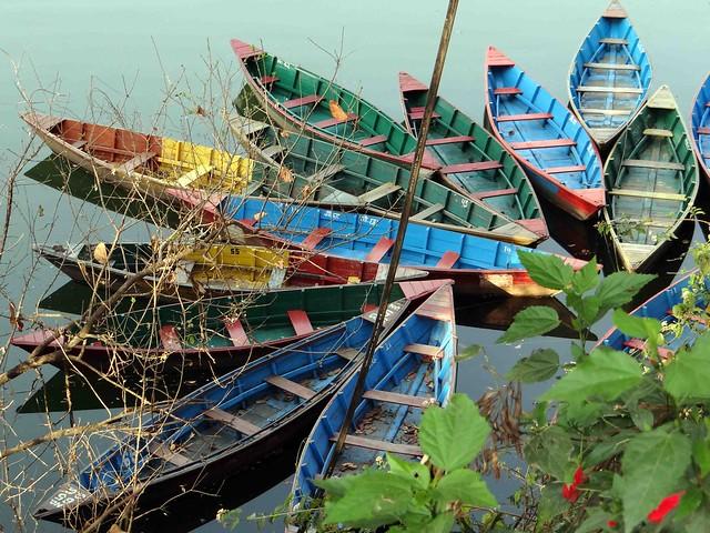 Longboats on Phewa Lake