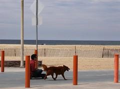 犬が人間を散歩に