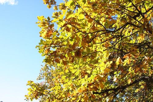 035_yellow