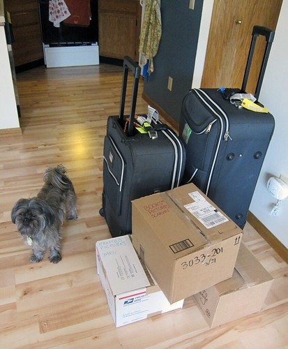 Two suitcases and three boxes, along with a small dog.