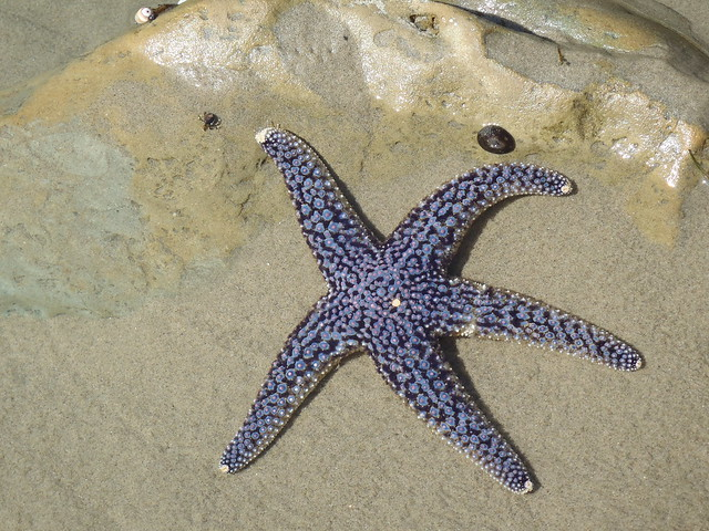 Starfish on Broad Beach by JW Najarian