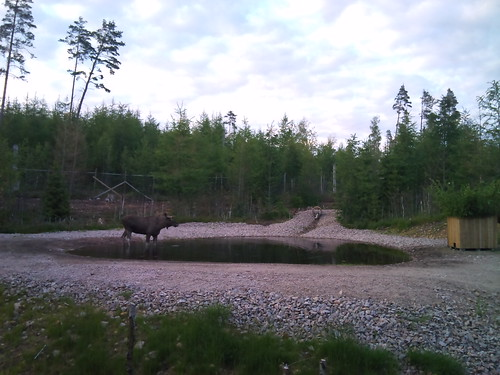 Moose bathing by XPeria2Day