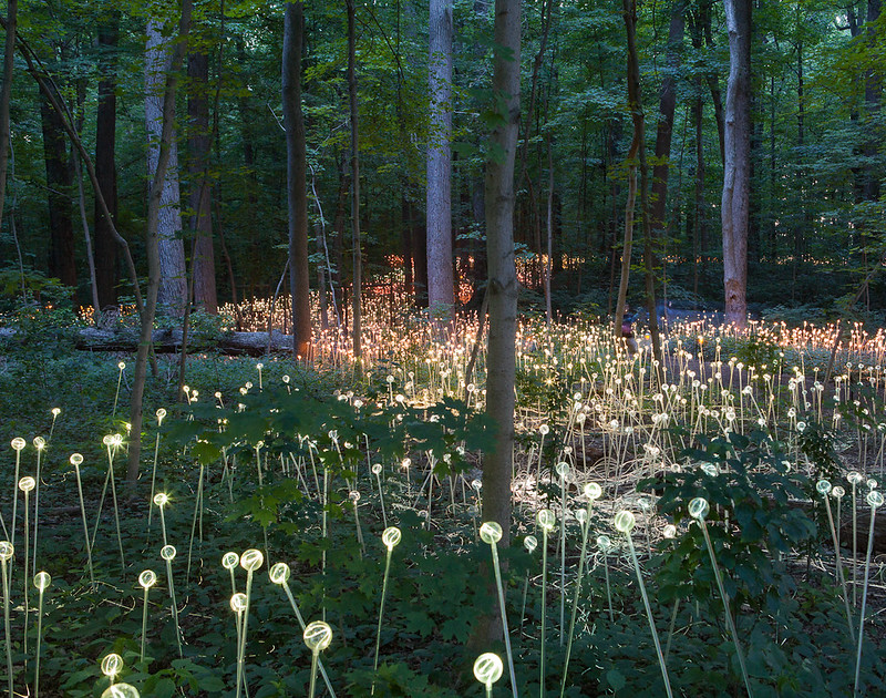 Bruce Munro S Light Installations At Longwood Gardens