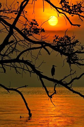 sunset beach silhouette paradise crane johor maur thegalaxy westmalaysia muarriver colorphotoaward mygearandme