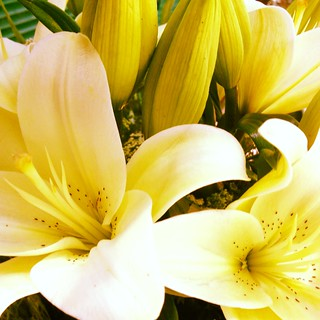Fresh lillies
