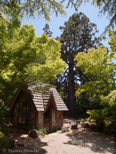 The 'Bottle House' and Giant Sequoia at the Marin Art & Garden Center, Ross, Marin, California