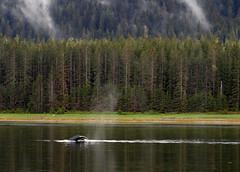 Whale- Juneau 2551 cu