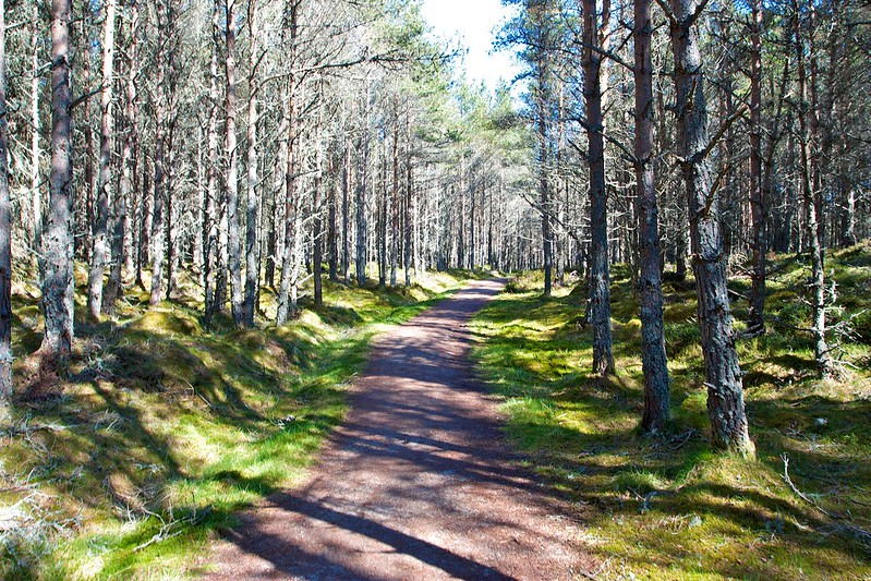 Woods near the Linn of Dee