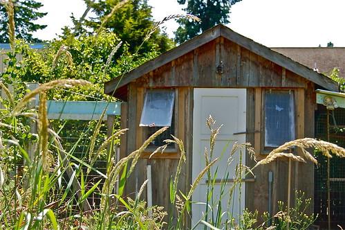 community chicken house