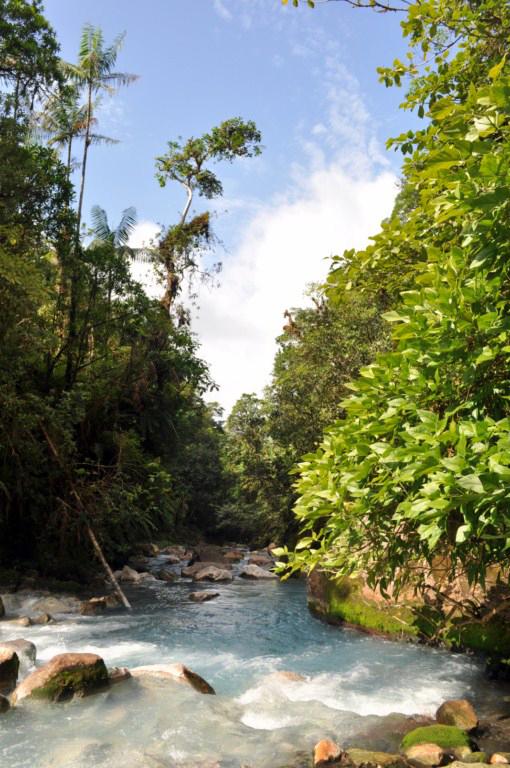 Vista del Río desde el final del camino, vista que se disfruta mientras acomodado en las piscinas naturales de aguas termales del Río Celeste río celeste, colorido capricho de la naturaleza - 7538425946 378944652f o - Río Celeste, Colorido capricho de la Naturaleza