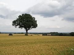 Corley Landscape