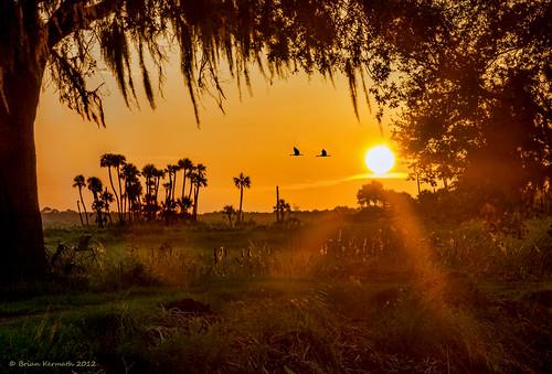 sunset birds palms florida centralflorida lakewoodruff cabbagepalms flickraward birdsinfligh flickraward5
