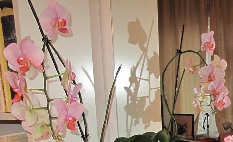 Orkidea, varjoa ja pelikuva by Anna Amnell