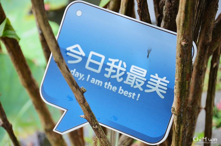 植物園使君子04.jpg