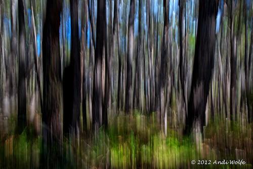ICM: Eucalyptus grove by andiwolfe