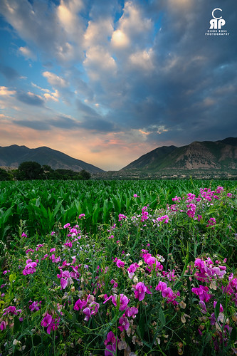 pink sunset mountains green utah corn wasatch salem