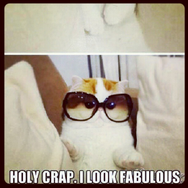 notmyphoto cat sunglasses fabulous cute kittycat funny meme
