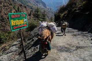 horses in nepal