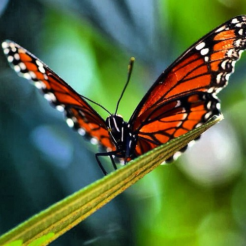 Lovely butterfly by juli anna