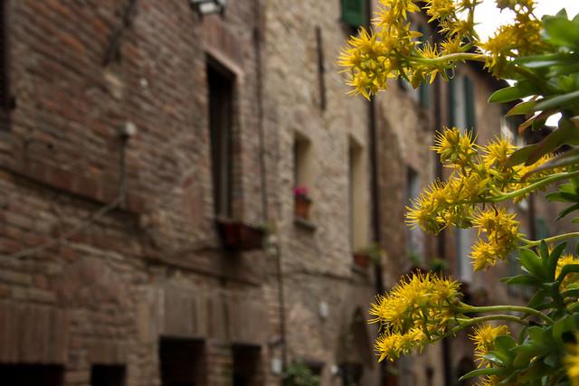 Città della Pieve - Umbria, Italy-8600
